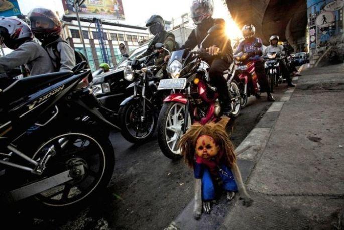 Monos con mascara indonesia (5)