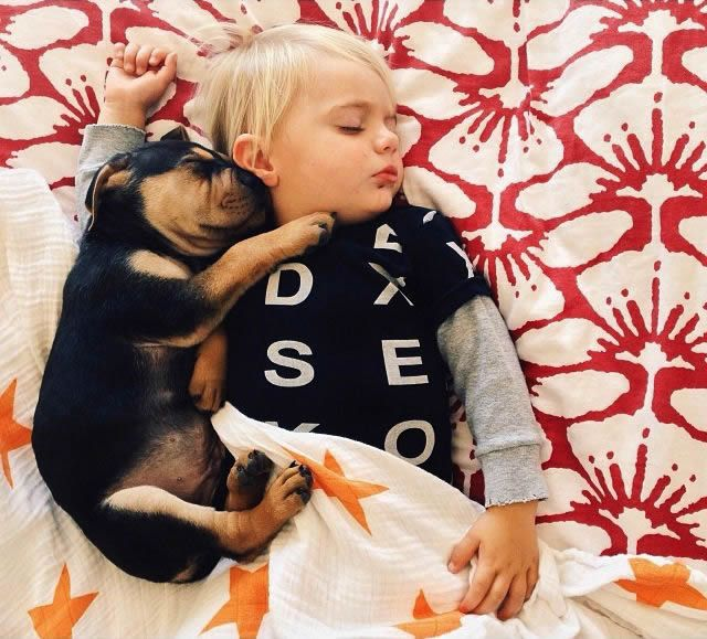 Fotos Siesta de Beau y Theo (11)