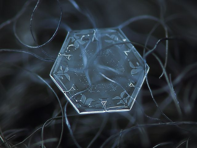 Fotografías de copos de nieve (16)