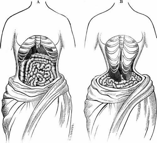 cinturas más pequeñas