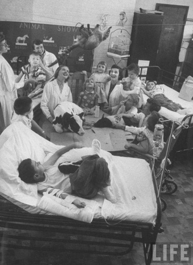 Zooterapia hospital (5)