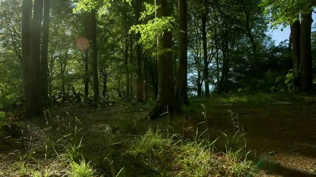 Out Of A Forest shortfilm stop motion (4)