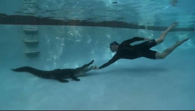 Cómo retirar un cocodrilo de una piscina sólo con las manos