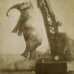 Mary elefanta ahorcada
