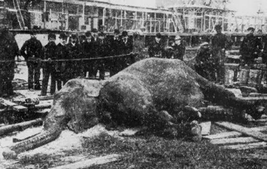 elefanta mary circo sparks
