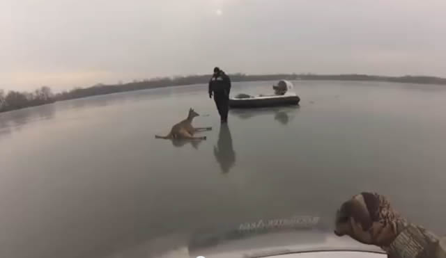 2 ciervos atrapados en un lago congelado