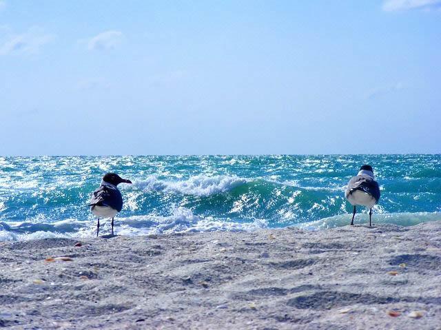 gaviotas playa