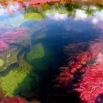 Caño Cristales: hermoso rio en Colombia