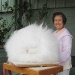 Hermosos conejos angora