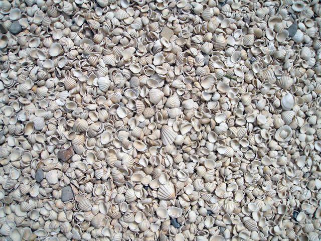 Fadiouth isla conchas Senegal (4)