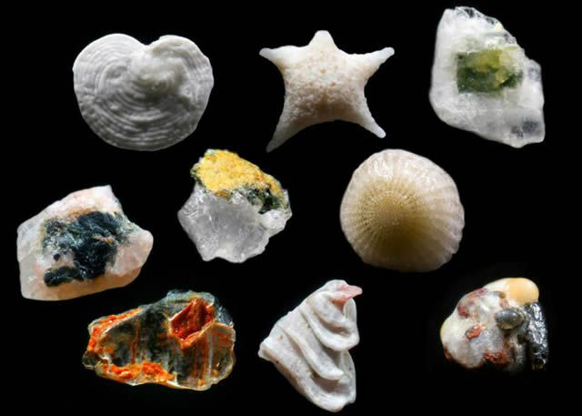 Granos de arena microscopio Gary Greenberg (5)