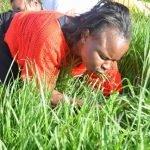 Religiosos sudafricanos comen pasto para acercarse a Dios