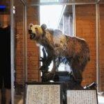 El caso Wandervögel, el ataque de un oso pardo