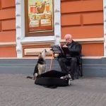 Perro abandonado y músico callejero, compañeros de trabajo