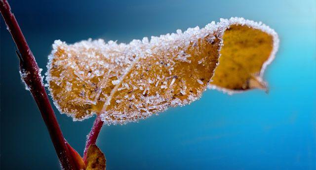 hoja congelada