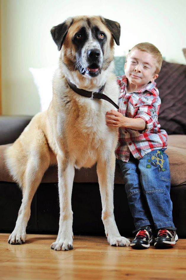Owen y Haatchi (12)