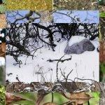20 animales maestros de camuflaje en la naturaleza