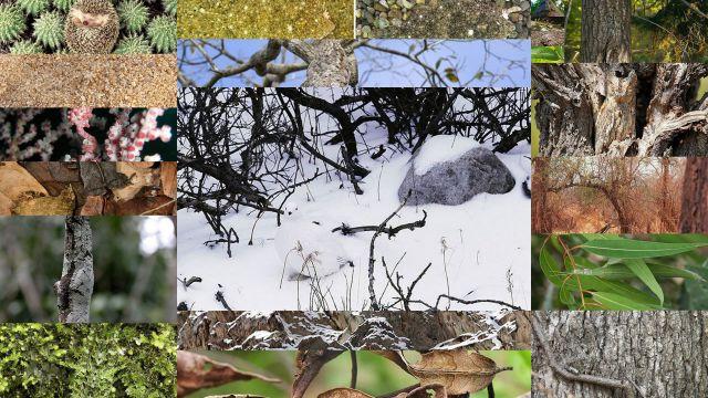 camuflaje animal