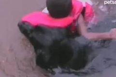 perro salvavidas