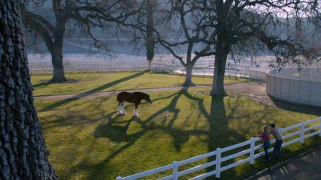 Puppy Love comercial Super Bowl (6)
