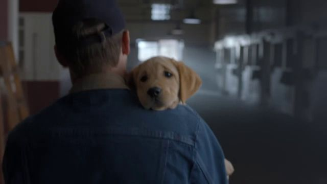 Puppy Love comercial Super Bowl (4)