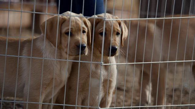 Puppy Love comercial Super Bowl (2)