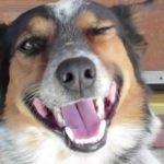 Jumpy, un perro extremadamente inteligente