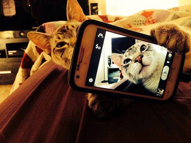 Selfies gatunas (15)