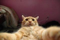 Selfies gatunas (8)