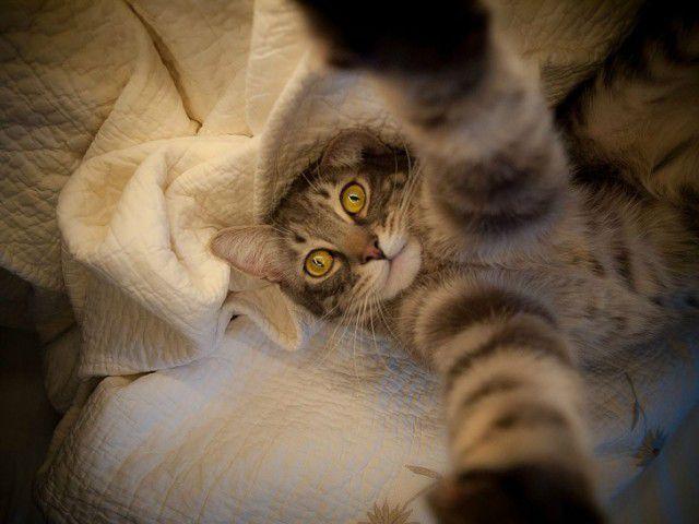 Selfies gatunas (6)