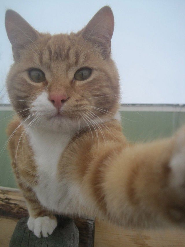 Selfies gatunas (21)