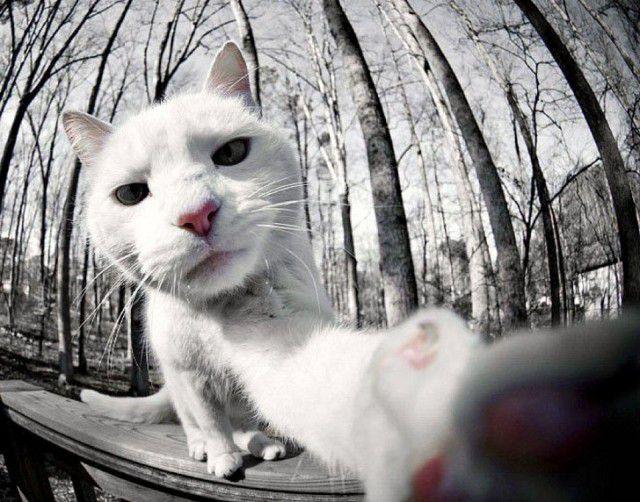 Selfies gatunas (19)