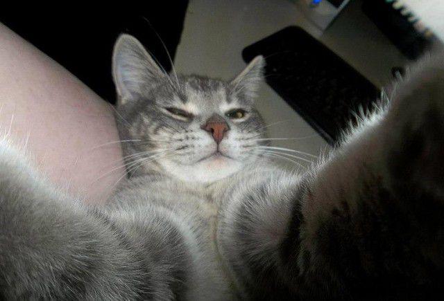 Selfies gatunas (17)