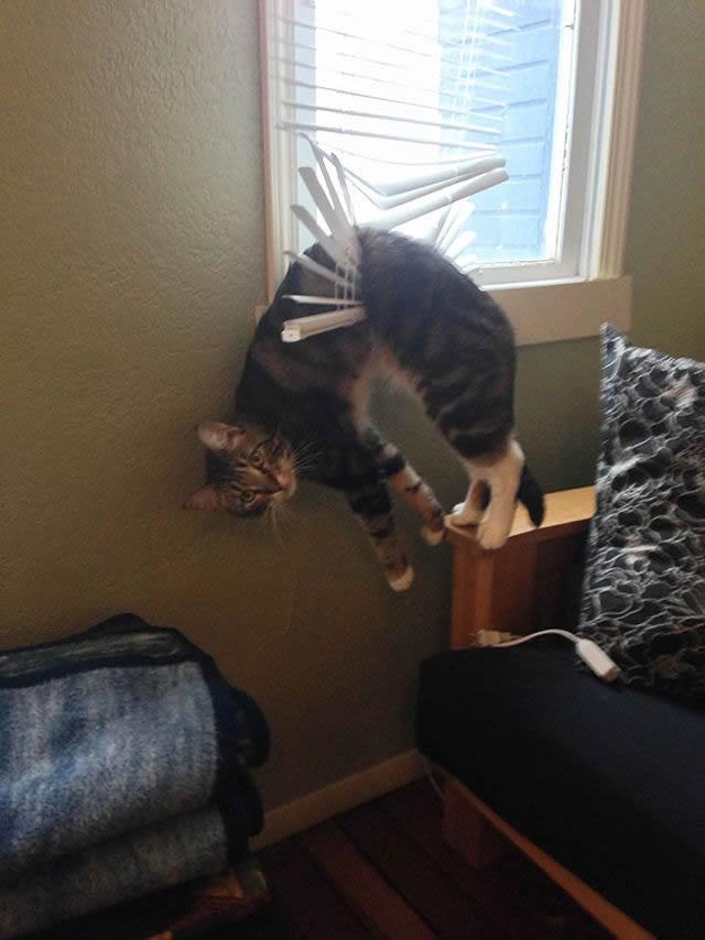 animales vs muebles (3)