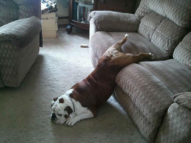 animales vs muebles (6)