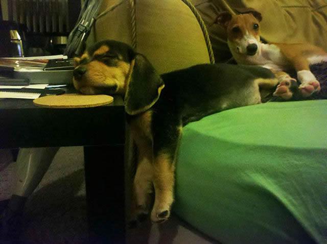 animales vs muebles (5)