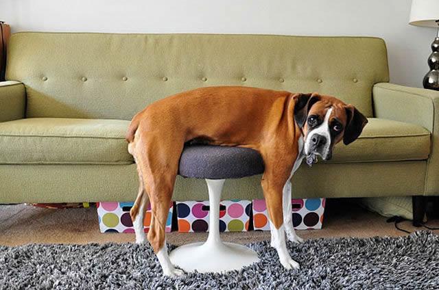 animales vs muebles (12)