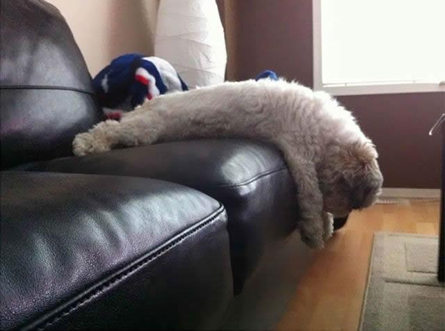 animales vs muebles (17)