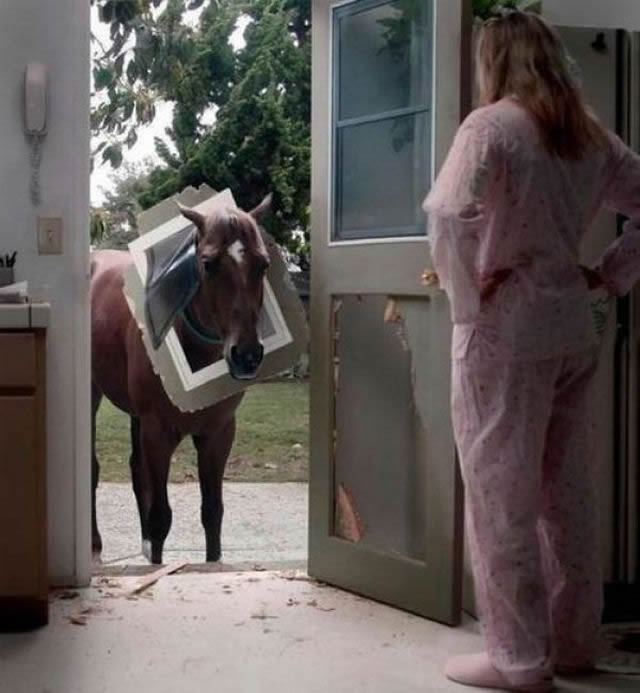 animales vs muebles (36)