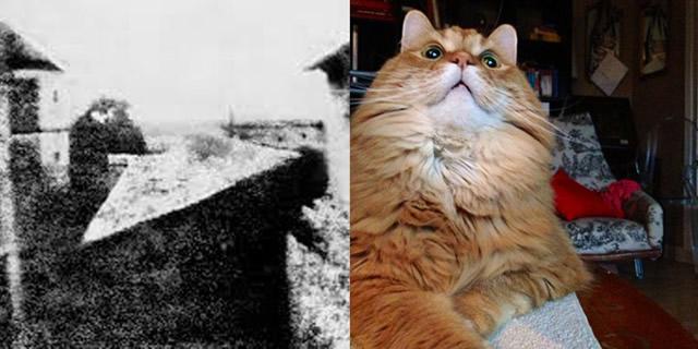 primera foto y selfie de gato