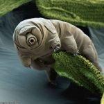 Tardígrados, los animales más resistentes del mundo