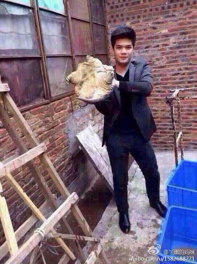 Tortuga mordedora China (1)
