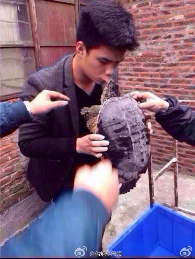 Tortuga mordedora China (4)