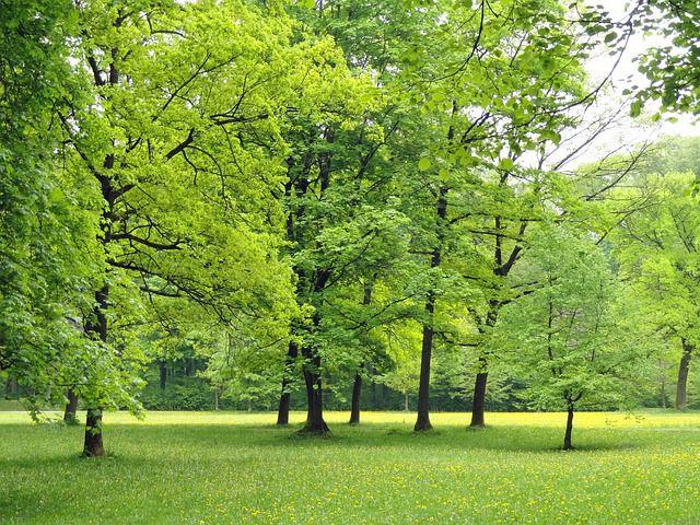 campo verde alemania