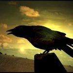 10 datos fascinantes sobre los cuervos