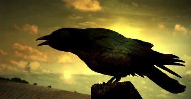 cuervo sombra