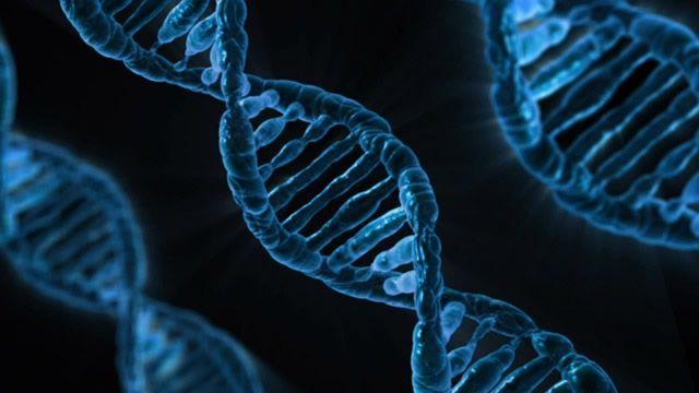 genoma adn