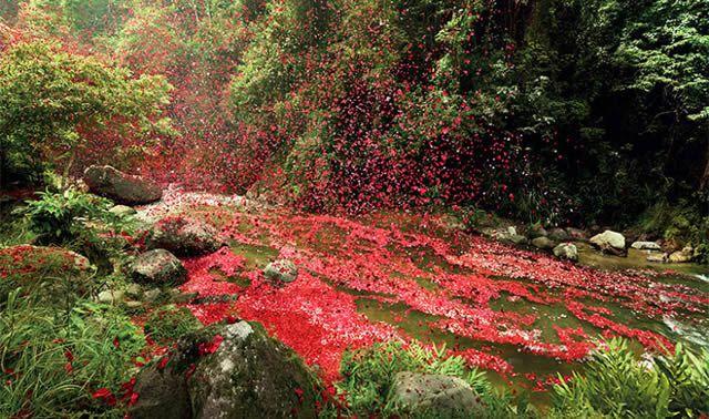 Lluvia de flores en Costa Rica - Sony (3)