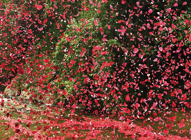 Lluvia de flores en Costa Rica - Sony (2)