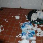 Cosas que los perros hacen cuando se quedan solos en casa